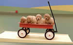 Puppies in Wagon feature